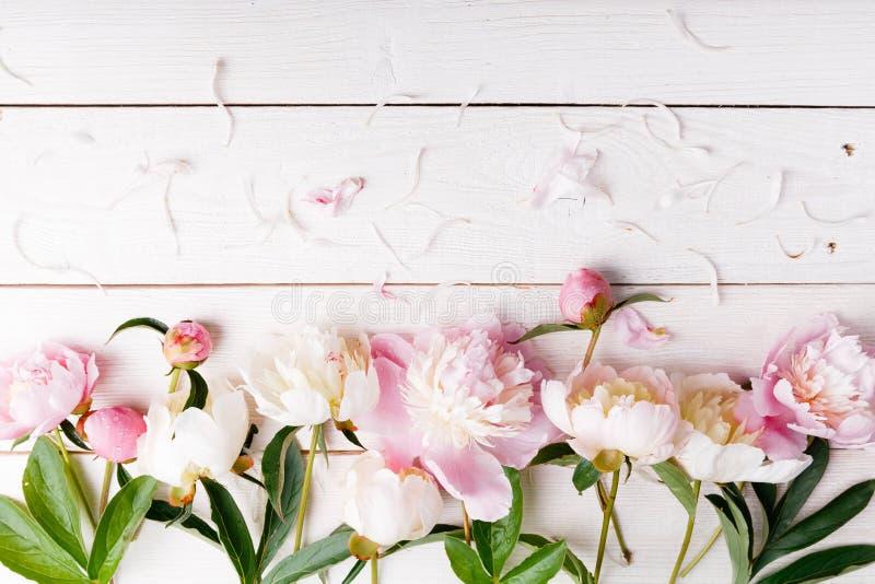 Λεπτός άσπρος ρόδινος peony με τα πέταλα ανθίζει και άσπρη κορδέλλα στον ξύλινο πίνακα Η υπερυψωμένη τοπ άποψη, επίπεδη βάζει διά στοκ εικόνα