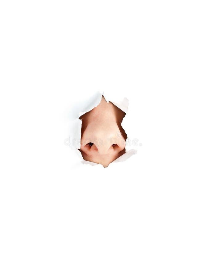 λευκή γυναίκα μύτης στοκ εικόνες