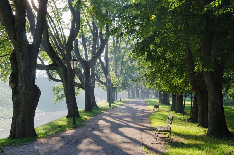 Λευκορωσία, Nesvizh Ηλιόλουστο πρωί στο πάρκο στοκ φωτογραφίες