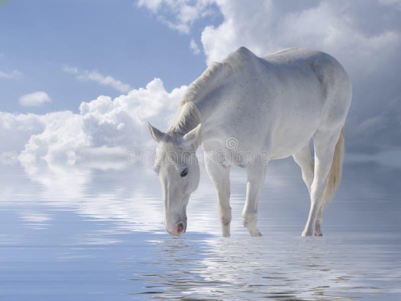 λευκό αλόγων απεικόνιση αποθεμάτων
