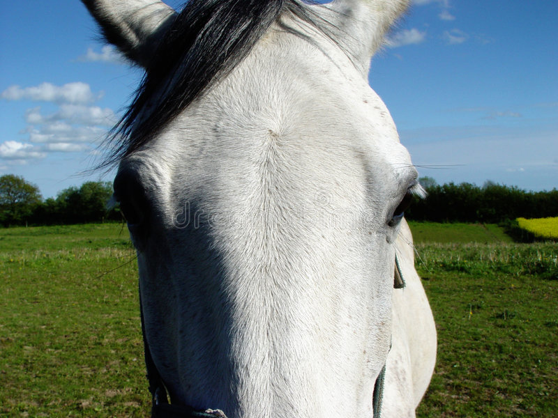 λευκό αλόγων s ματιών