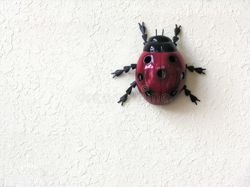 λευκό ανασκόπησης ladybug στοκ εικόνες