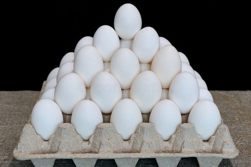 λευκό αυγών κοτόπουλου στοκ εικόνες