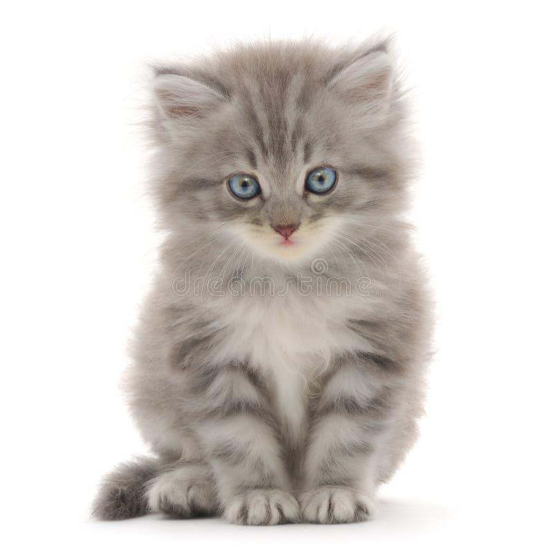 λευκό γατακιών ανασκόπησ& στοκ εικόνες