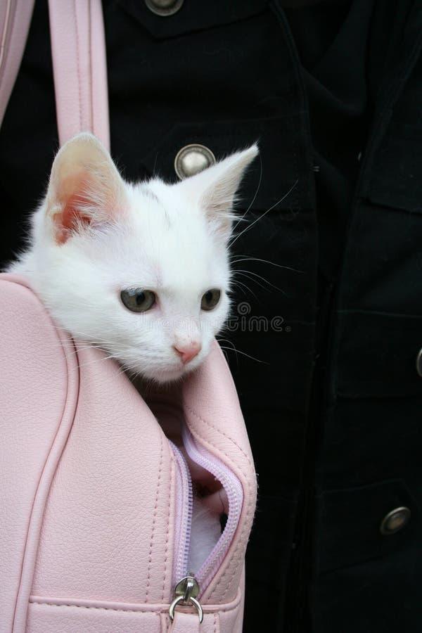 λευκό γατών στοκ φωτογραφίες