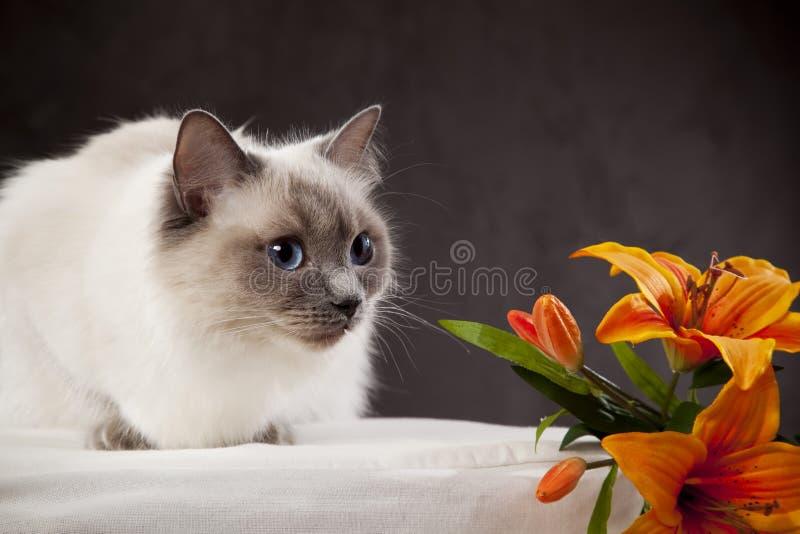 λευκό γατών στοκ φωτογραφία με δικαίωμα ελεύθερης χρήσης