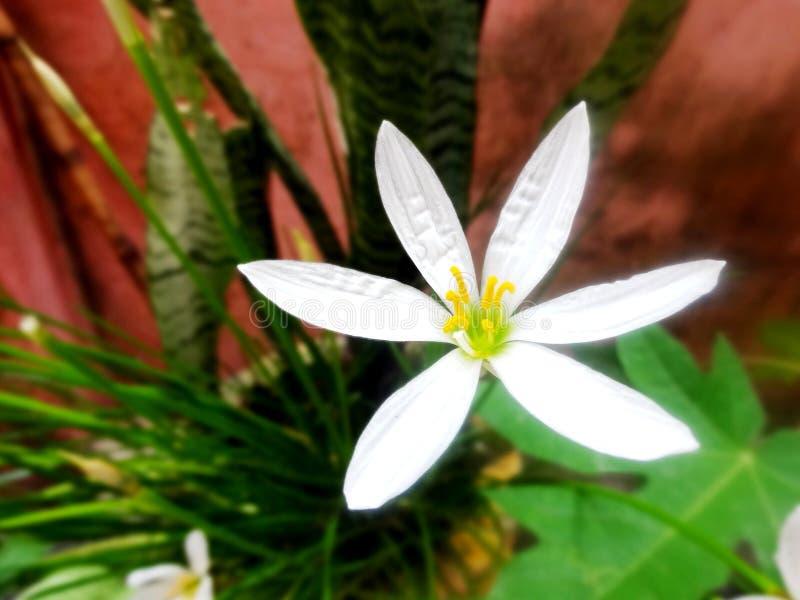 Λευκό για την ειρήνη στοκ εικόνες
