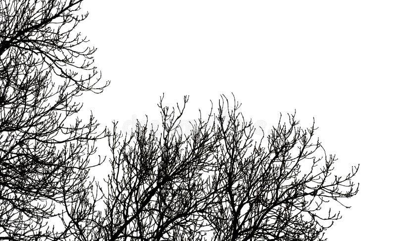 λευκό δέντρων κλάδων στοκ εικόνες με δικαίωμα ελεύθερης χρήσης