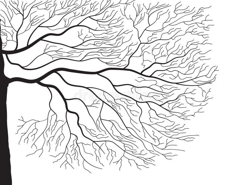 λευκό δέντρων σκιαγραφιώ&nu διανυσματική απεικόνιση