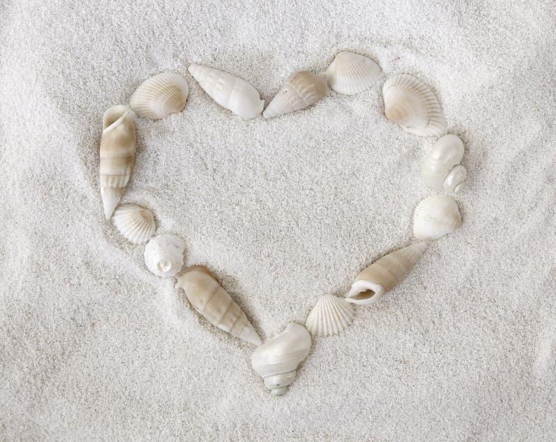λευκό θαλασσινών κοχυ&lambd στοκ εικόνα