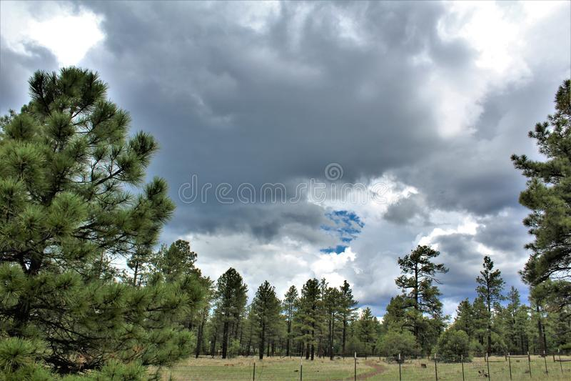 Λευκό κέντρο φύσης βουνών, όχθη της λίμνης Pinetop, Αριζόνα, Ηνωμένες Πολιτείες στοκ εικόνες