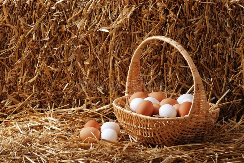 λευκό καφετιών αυγών καλαθιών στοκ εικόνες