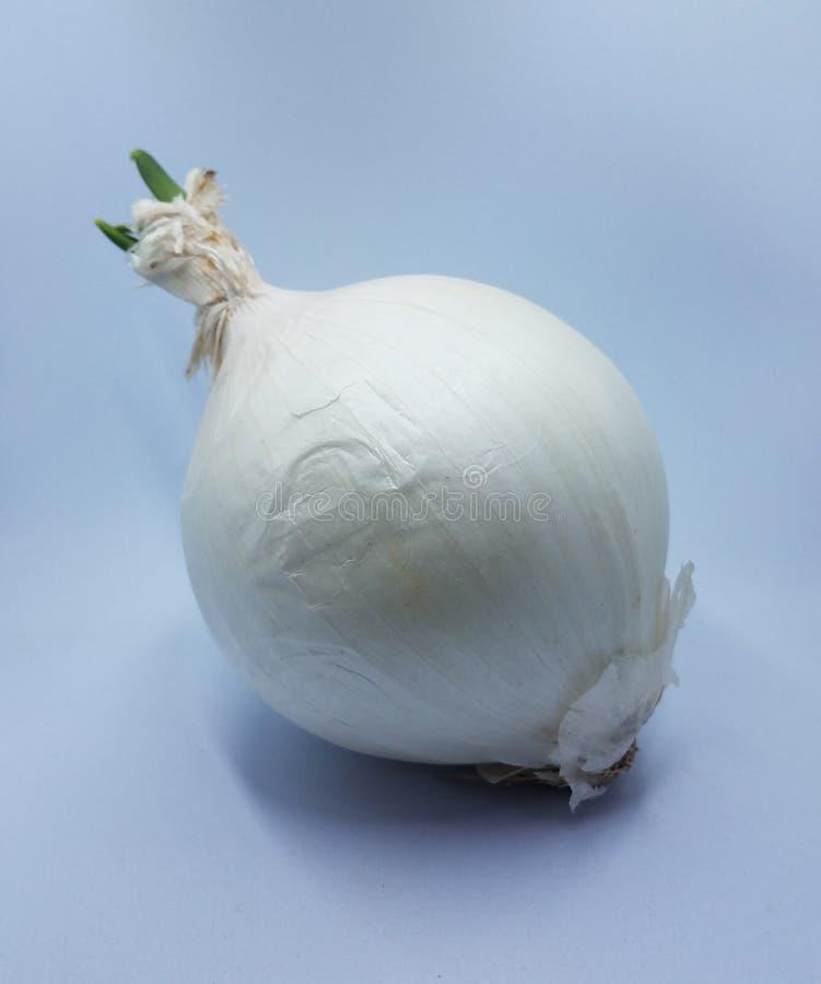 Λευκό κρεμμύδι με πράσινο sprout σε λευκό φόντο στοκ φωτογραφίες με δικαίωμα ελεύθερης χρήσης