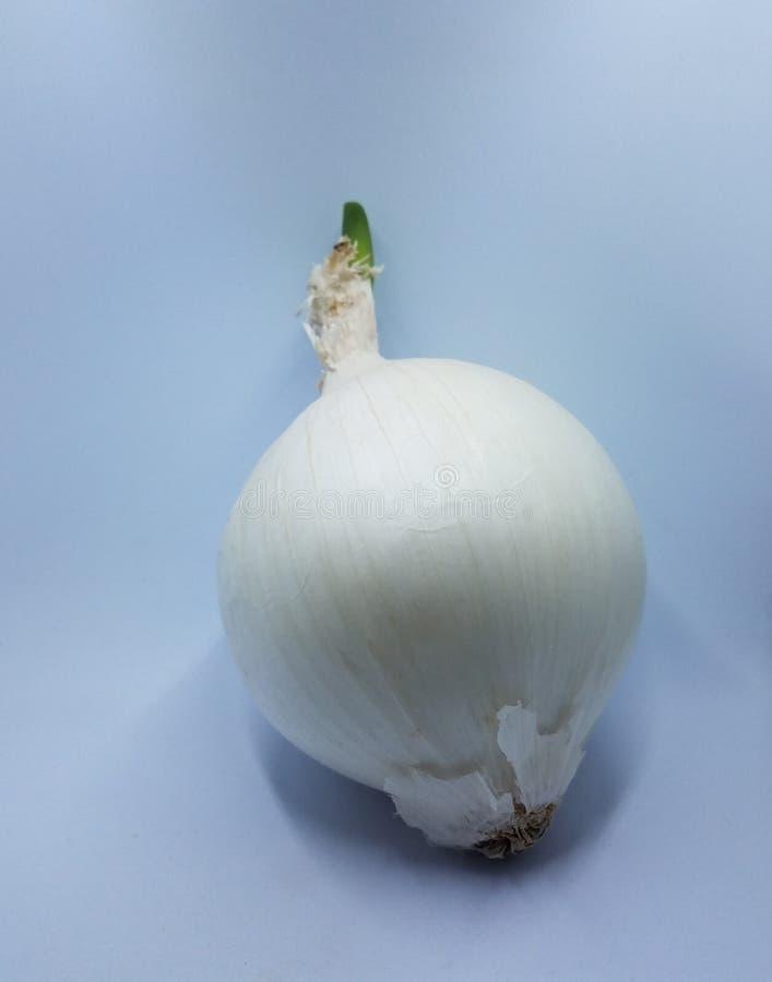 Λευκό κρεμμύδι με πράσινο sprout σε λευκό φόντο στοκ εικόνες