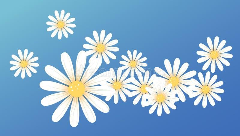 λευκό λουλουδιών μαργ& διανυσματική απεικόνιση