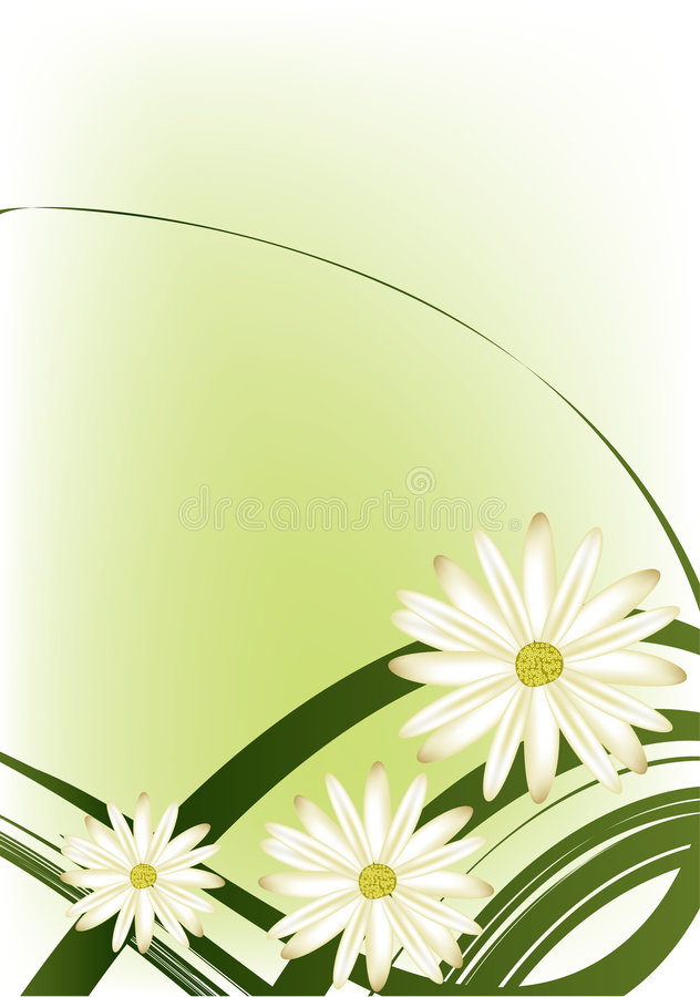 λευκό λουλουδιών διανυσματική απεικόνιση