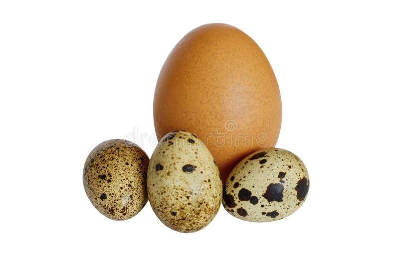 λευκό νησοπέρδικων αυγών κοτόπουλου ανασκόπησης στοκ φωτογραφίες με δικαίωμα ελεύθερης χρήσης