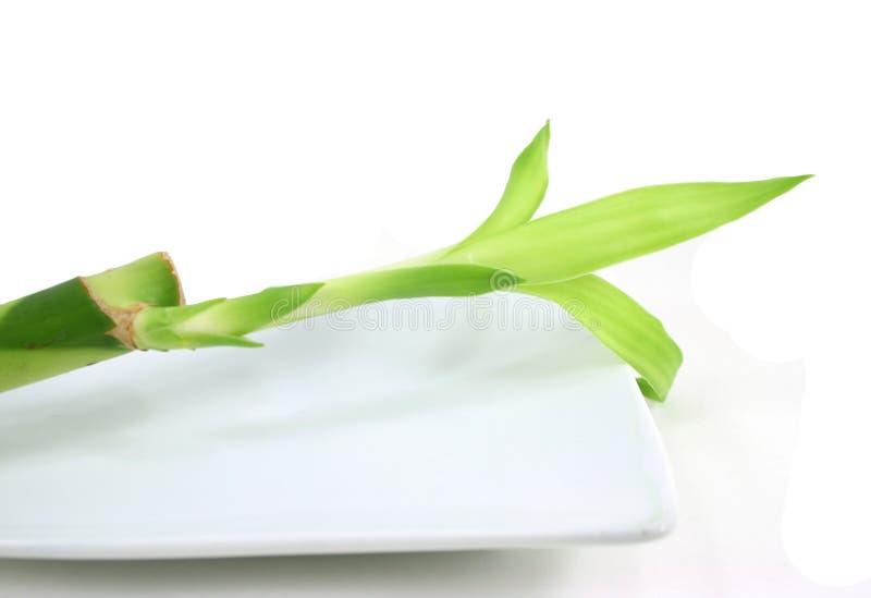 λευκό πιάτων μπαμπού στοκ φωτογραφία με δικαίωμα ελεύθερης χρήσης