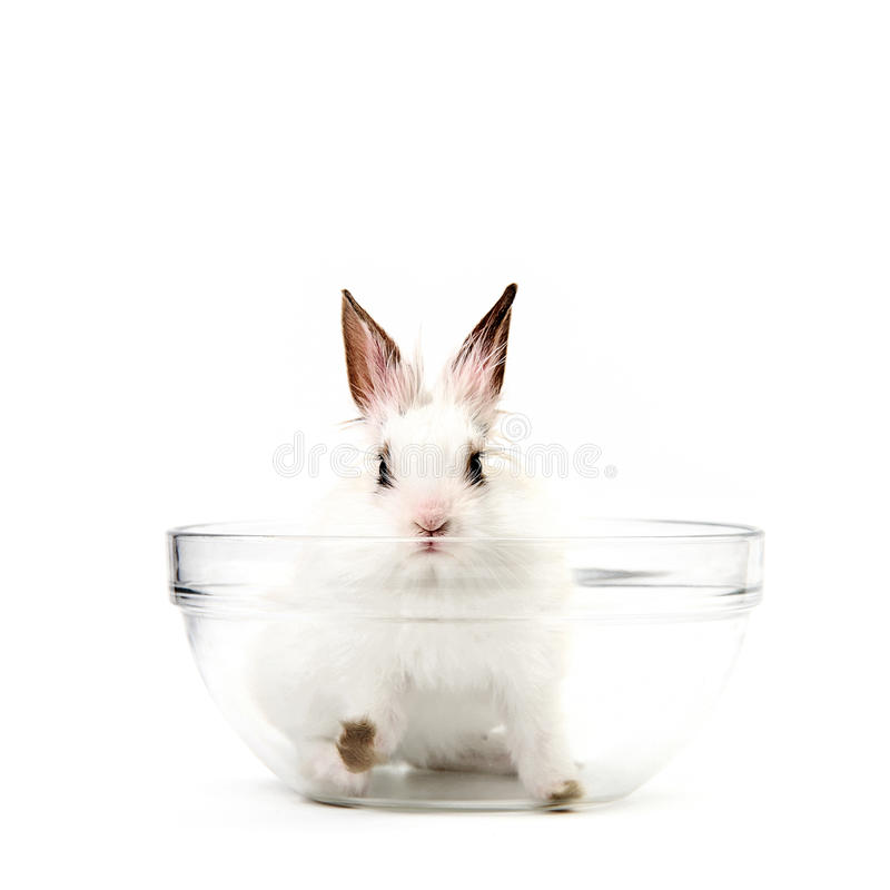 λευκό σαλάτας κουνελ&iota στοκ εικόνες