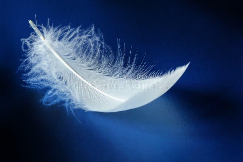 λευκό φτερών στοκ φωτογραφία