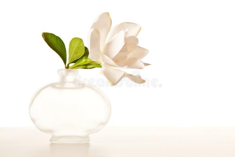 λευκό gardenia ανθών στοκ εικόνες με δικαίωμα ελεύθερης χρήσης