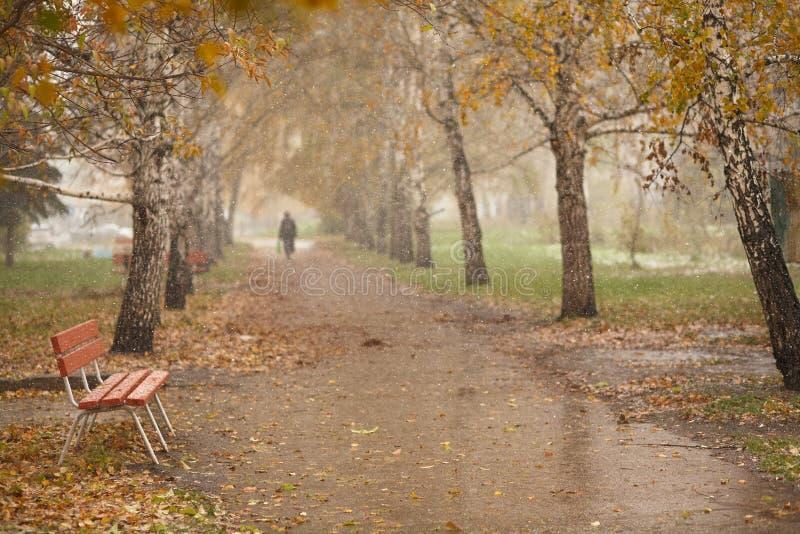 Λεωφόρος σημύδων φθινοπώρου στοκ φωτογραφία με δικαίωμα ελεύθερης χρήσης