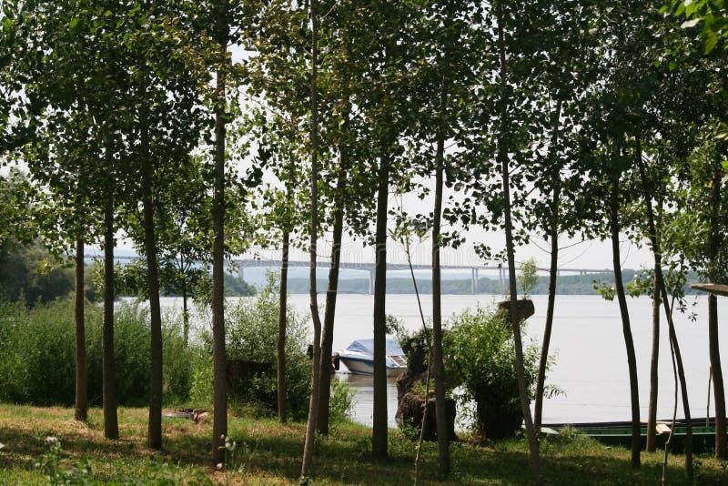 Λεύκες κατά μήκος του ποταμού στοκ φωτογραφίες με δικαίωμα ελεύθερης χρήσης