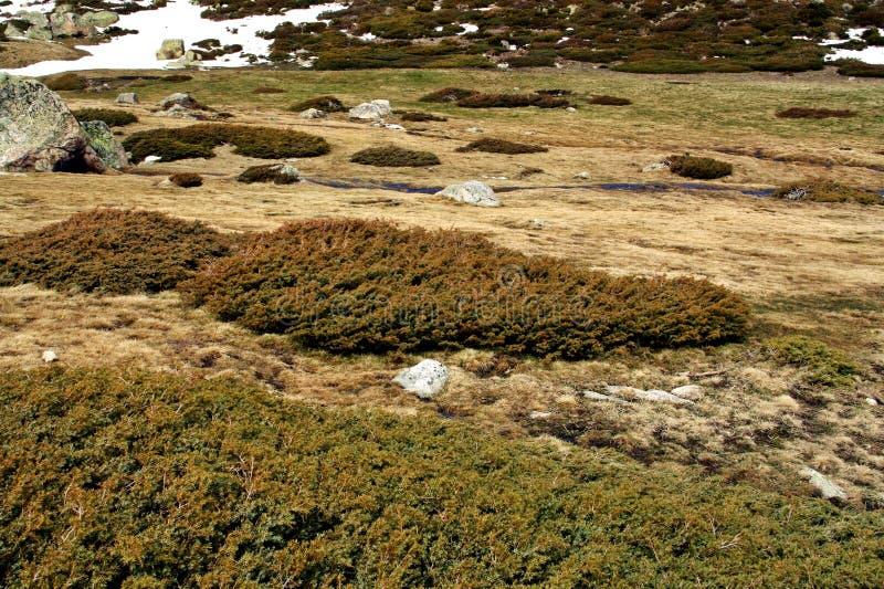 Λιβάδια και χιόνι σε ένα ισπανικό βουνό στοκ εικόνα με δικαίωμα ελεύθερης χρήσης