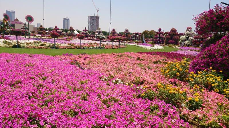 Λιβάδια λουλουδιών στοκ φωτογραφία με δικαίωμα ελεύθερης χρήσης
