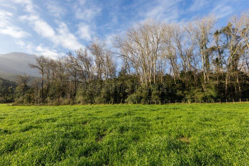 λιβάδι καλλιεργήσιμου εδάφους με μια γραμμή ψηλών δέντρων στοκ φωτογραφία με δικαίωμα ελεύθερης χρήσης