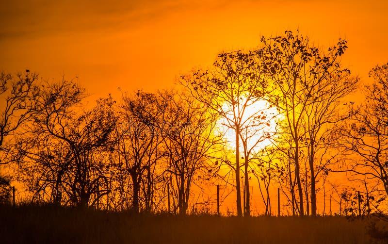 Λιβάδι με τον ήλιο 6 στοκ εικόνα με δικαίωμα ελεύθερης χρήσης