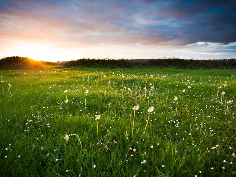 λιβάδι πέρα από το ηλιοβασί στοκ εικόνα