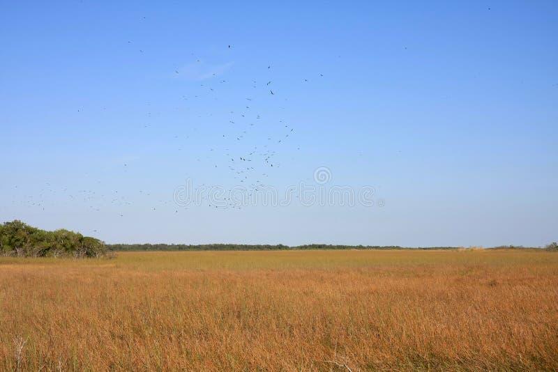 Λιβάδι Sawgrass, εθνικό πάρκο Everglades στοκ εικόνες με δικαίωμα ελεύθερης χρήσης