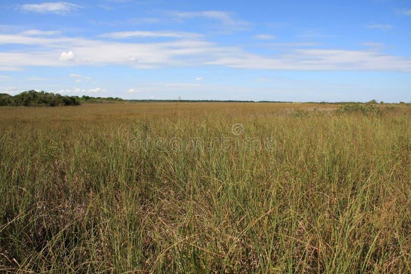 Λιβάδι Sawgrass, εθνικό πάρκο Everglades στοκ εικόνα με δικαίωμα ελεύθερης χρήσης