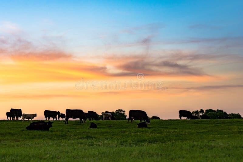Λιβάδι ηλιοβασιλέματος στοκ φωτογραφία με δικαίωμα ελεύθερης χρήσης