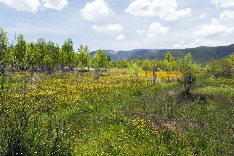 Λιβάδι κίτρινου Wildflowers Στοκ Φωτογραφία
