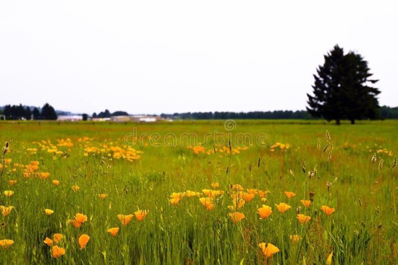 Λιβάδι με τα λουλούδια και τη σκιαγραφία χλόης και δέντρων στοκ φωτογραφία