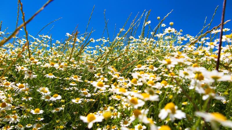 Λιβάδι λουλουδιών μια ηλιόλουστη ημέρα στοκ φωτογραφία με δικαίωμα ελεύθερης χρήσης