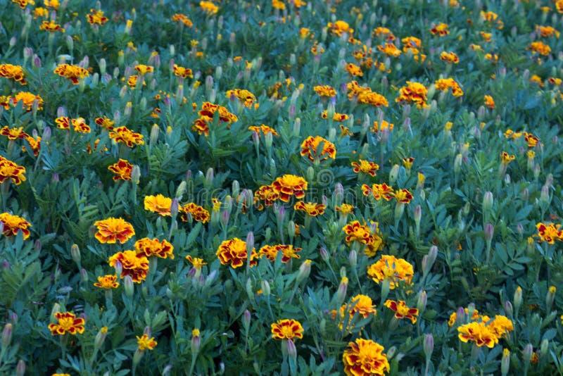 Λιβάδι λουλουδιών στοκ εικόνες με δικαίωμα ελεύθερης χρήσης