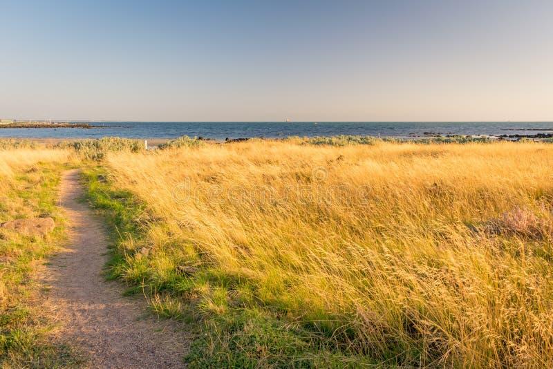 Λιβάδι στην παραλία Williamstown στοκ φωτογραφία