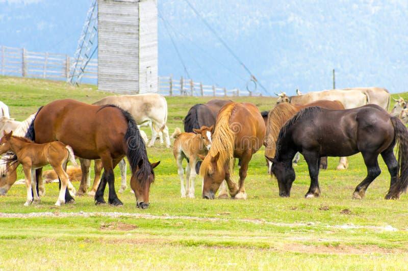 Λιβάδι των αλόγων και των αγελάδων στοκ φωτογραφία