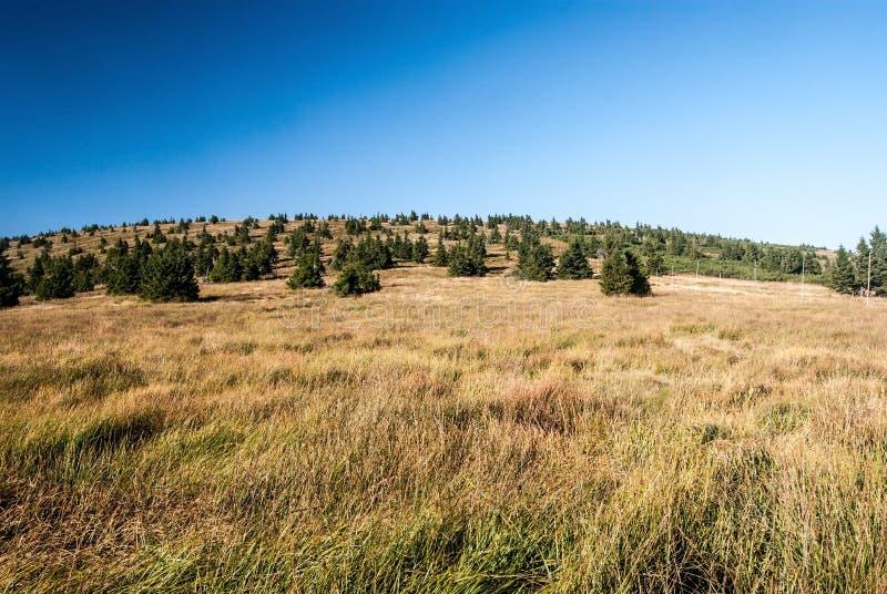 Λιβάδι Nountain με τα δέντρα και λόφος στα βουνά θερινού Jeseniky στοκ εικόνα