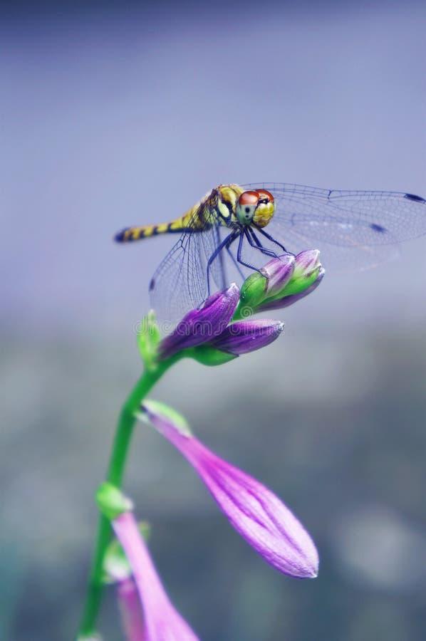 Λιβελλούλη και λουλούδι στοκ εικόνα με δικαίωμα ελεύθερης χρήσης