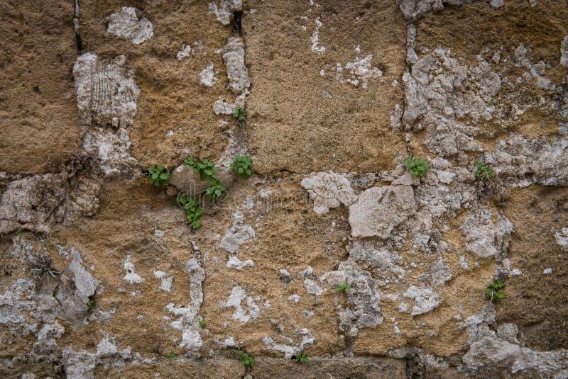Λιθοστρωμένος κίτρινος λεκιασμένος τοίχος με τις πράσινες εγκαταστάσεις στοκ φωτογραφία με δικαίωμα ελεύθερης χρήσης
