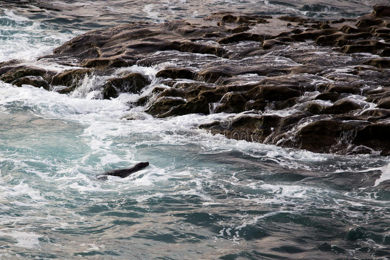 Download Λιμενική σφραγίδα στοκ εικόνες. εικόνα από ζωή, ναυτικό - 62714902