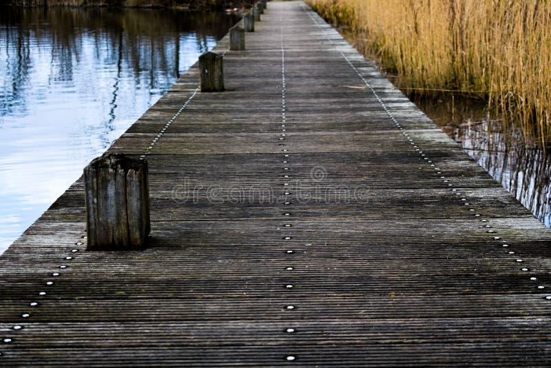 Λιμενοβραχίονας από την ακτή σε ένα δάσος στο Χάρλεμ Άμστερνταμ Ολλανδία στοκ φωτογραφία με δικαίωμα ελεύθερης χρήσης