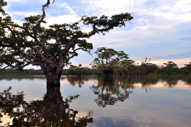 Λιμνοθάλασσα ποταμών του Αμαζονίου στοκ φωτογραφία με δικαίωμα ελεύθερης χρήσης