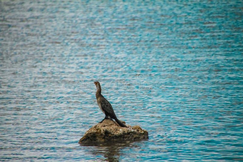 Λιμνών κόκκινο ράμφος πουλιών νερού πάρκων Amboseli εθνικό στοκ φωτογραφίες με δικαίωμα ελεύθερης χρήσης