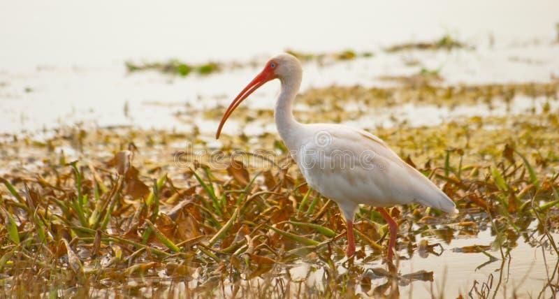 λιμνών πουλιών στοκ φωτογραφία