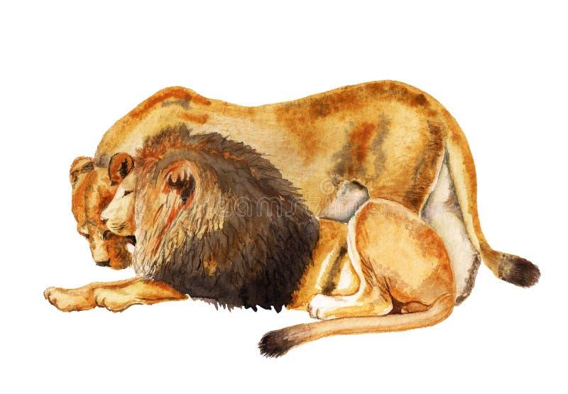 Λιοντάρι και λιονταρίνα ζεύγους διανυσματική απεικόνιση